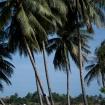 vietnam2009_20090320_2844